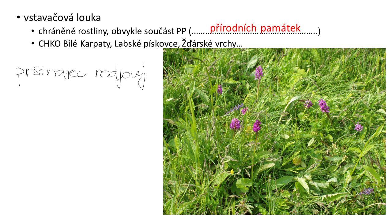 vstavačová louka chráněné rostliny, obvykle součást PP (………………………………………………..) CHKO Bílé Karpaty, Labské pískovce, Žďárské vrchy… přírodních památek