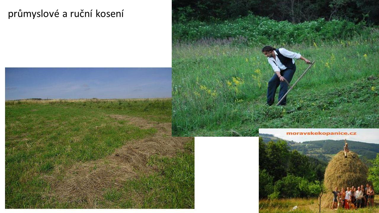 step suchá, rostliny kvetou ………………… …………………………………………………..