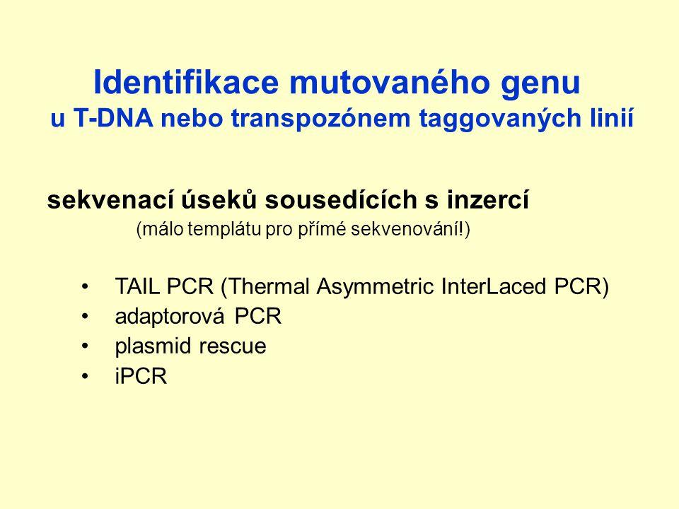 Identifikace mutovaného genu u T-DNA nebo transpozónem taggovaných linií sekvenací úseků sousedících s inzercí (málo templátu pro přímé sekvenování!) TAIL PCR (Thermal Asymmetric InterLaced PCR) adaptorová PCR plasmid rescue iPCR