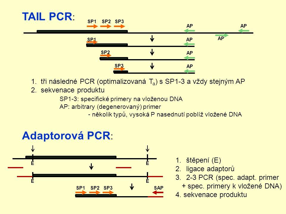 TAIL PCR : 1.tři následné PCR (optimalizovaná T a ) s SP1-3 a vždy stejným AP 2.