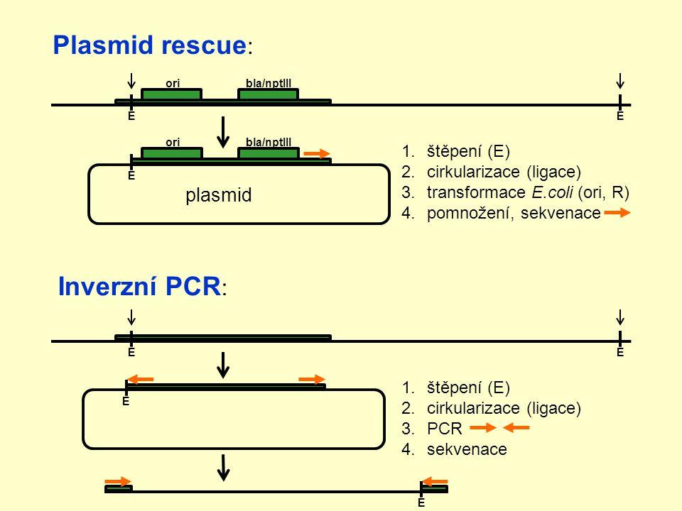 1.štěpení (E) 2.cirkularizace (ligace) 3.transformace E.coli (ori, R) 4.pomnožení, sekvenace oribla/nptIII E E oribla/nptIII E Plasmid rescue : Inverzní PCR : EE E 1.štěpení (E) 2.cirkularizace (ligace) 3.PCR 4.sekvenace plasmid E