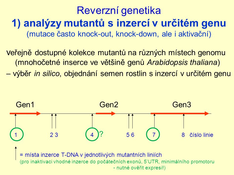 Reverzní genetika 1) analýzy mutantů s inzercí v určitém genu (mutace často knock-out, knock-down, ale i aktivační) v eřejně dostupné kolekce mutantů na různých místech genomu (mnohočetné inserce ve většině genů Arabidopsis thaliana) – výběr in silico, objednání semen rostlin s inzercí v určitém genu Gen1 Gen2 Gen3 = místa inzerce T-DNA v jednotlivých mutantních liniích (pro inaktivaci vhodné inzerce do počátečních exonů, 5'UTR, minimálního promotoru - nutné ověřit expresi!) 1 2 3 4 5 6 7 8 číslo linie ?