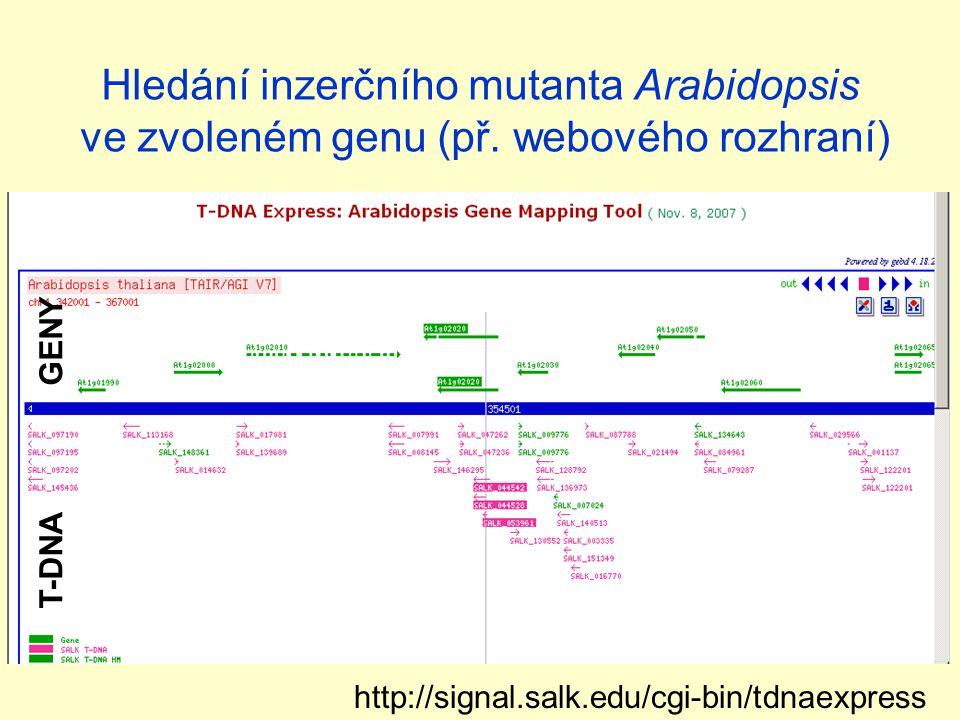 Hledání inzerčního mutanta Arabidopsis ve zvoleném genu (př.