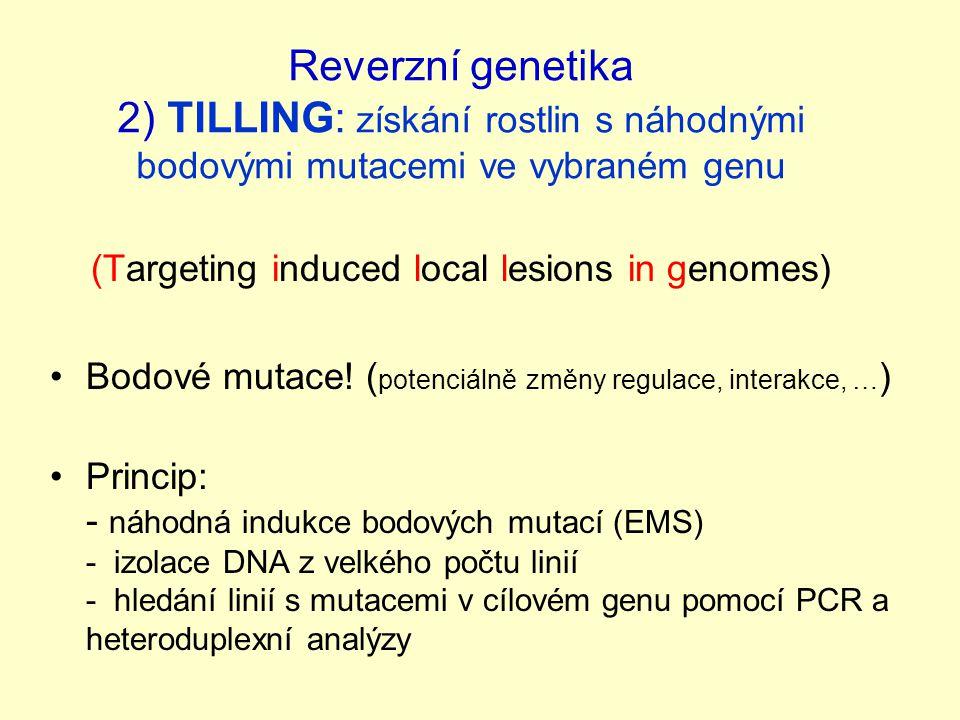 Reverzní genetika 2) TILLING: získání rostlin s náhodnými bodovými mutacemi ve vybraném genu (Targeting induced local lesions in genomes) Bodové mutace.