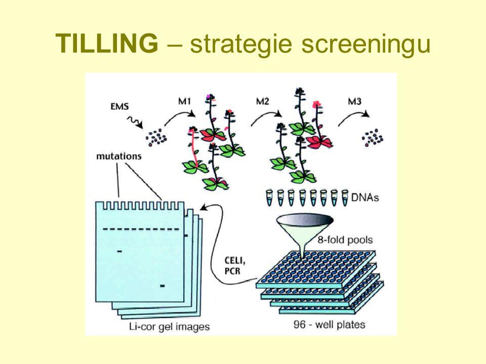 TILLING – strategie screeningu