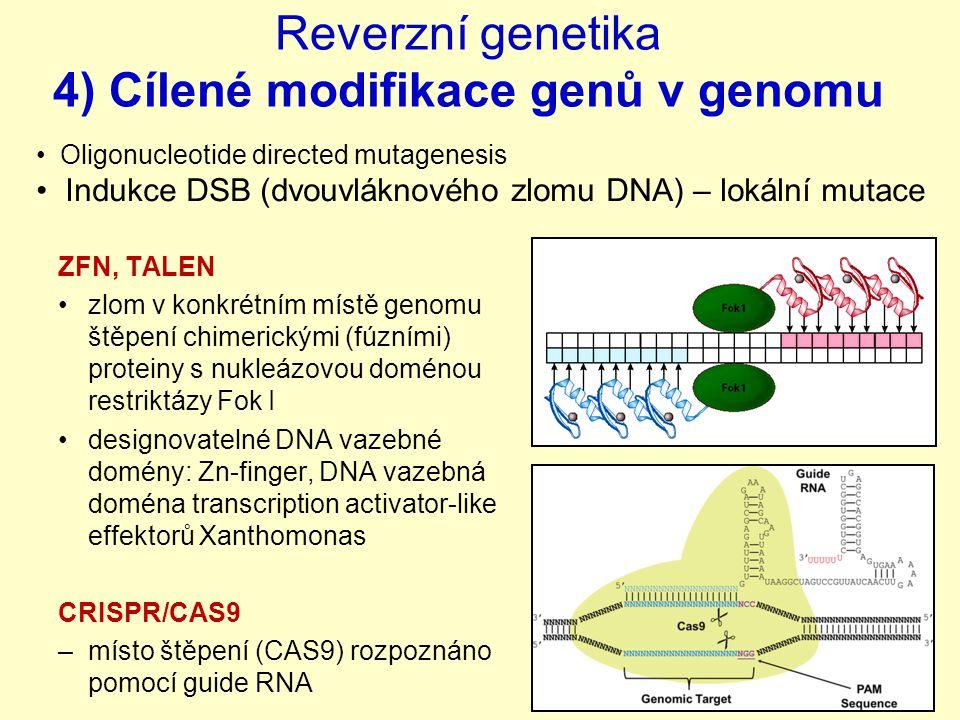 Reverzní genetika 4) Cílené modifikace genů v genomu ZFN, TALEN zlom v konkrétním místě genomu štěpení chimerickými (fúzními) proteiny s nukleázovou doménou restriktázy Fok I designovatelné DNA vazebné domény: Zn-finger, DNA vazebná doména transcription activator-like effektorů Xanthomonas CRISPR/CAS9 –místo štěpení (CAS9) rozpoznáno pomocí guide RNA Oligonucleotide directed mutagenesis Indukce DSB (dvouvláknového zlomu DNA) – lokální mutace