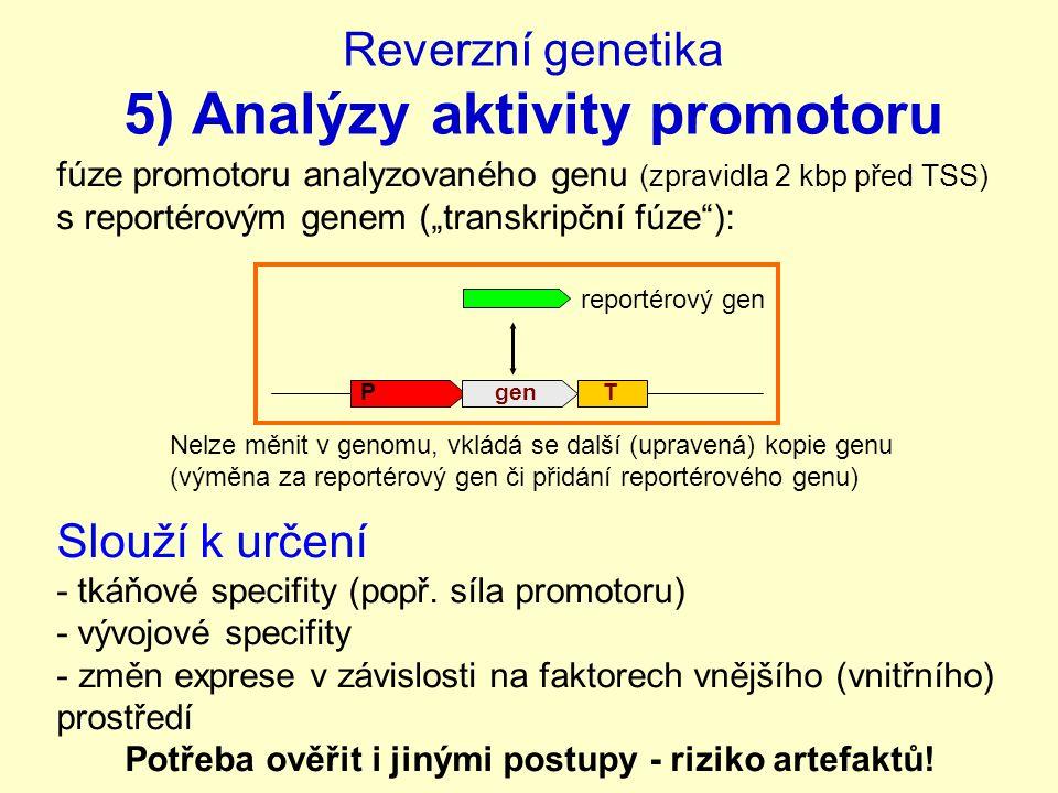 """Reverzní genetika 5) Analýzy aktivity promotoru fúze promotoru analyzovaného genu (zpravidla 2 kbp před TSS) s reportérovým genem (""""transkripční fúze ): Slouží k určení - tkáňové specifity (popř."""