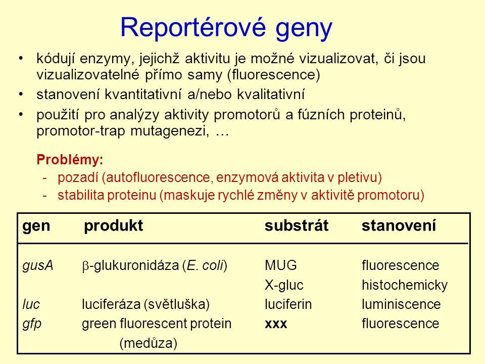 Reportérové geny kódují enzymy, jejichž aktivitu je možné vizualizovat, či jsou vizualizovatelné přímo samy (fluorescence) stanovení kvantitativní a/nebo kvalitativní použití pro analýzy aktivity promotorů a fúzních proteinů, promotor-trap mutagenezi, … Problémy: -pozadí (autofluorescence, enzymová aktivita v pletivu) -stabilita proteinu (maskuje rychlé změny v aktivitě promotoru) gen produkt substrátstanovení gusA  -glukuronidáza (E.