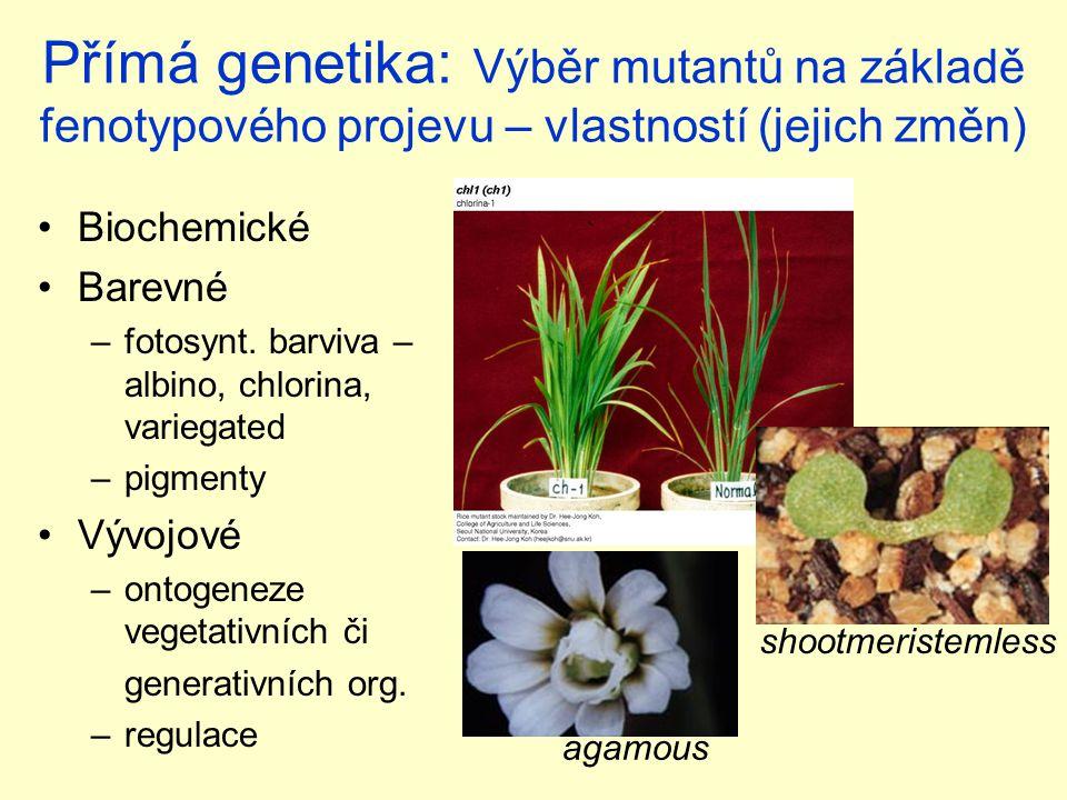 Přímá genetika: Výběr mutantů na základě fenotypového projevu – vlastností (jejich změn) Biochemické Barevné –fotosynt.