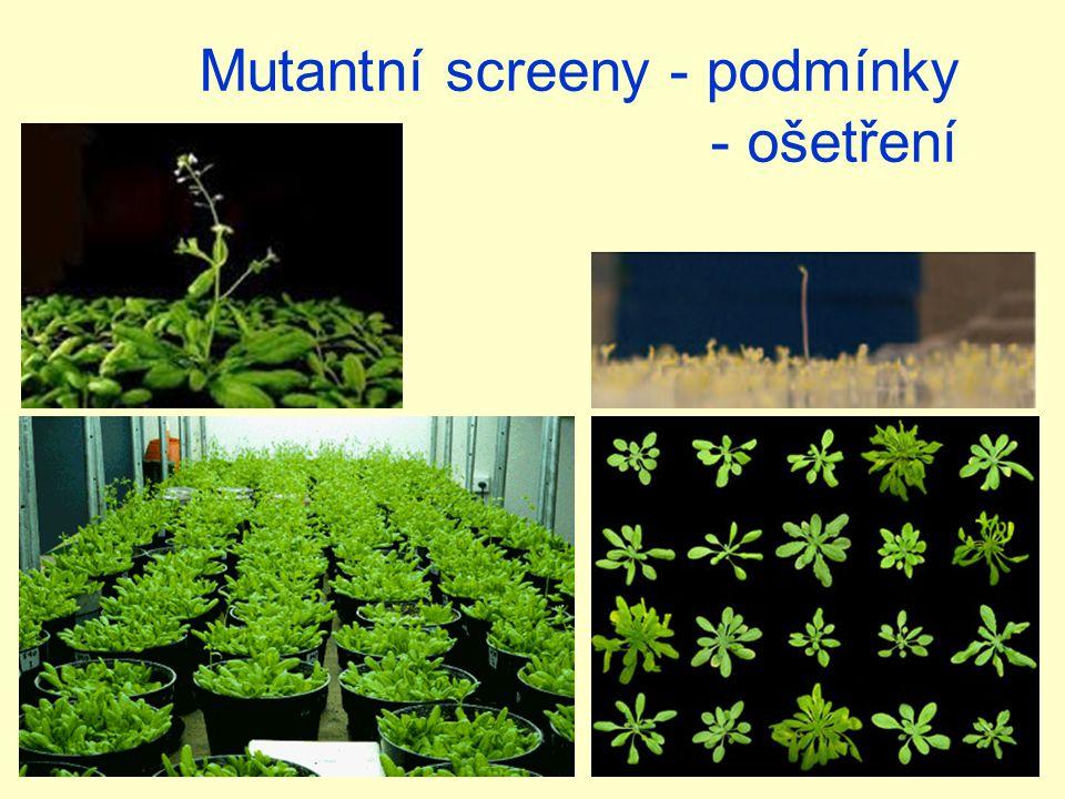 Mutantní screeny - podmínky - ošetření