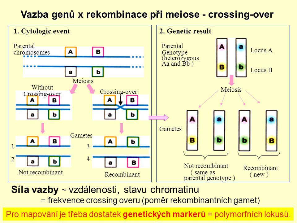 Vazba genů x rekombinace při meiose - crossing-over Vazba genů x rekombinace při meiose - crossing-over Pro mapování je třeba dostatek genetických markerů = polymorfních lokusů.