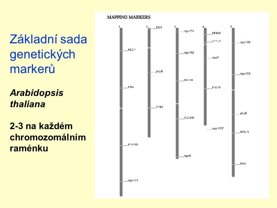 Základní sada genetických markerů Arabidopsis thaliana 2-3 na každém chromozomálním raménku