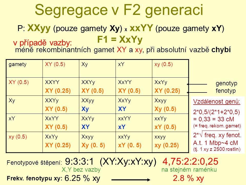 Segregace v F2 generaci gametyXY (0.5)XyxYxy (0.5) XY (0.5)XXYY XY (0.25) XXYy XY (0.5) XxYY XY (0.5) XxYy XY (0.25) XyXXYy XY (0.5) XXyy Xy XxYy XY Xxyy Xy (0.5) xYXxYY XY (0.5) XxYy XY xxYY xY xxYy xY (0.5) xy (0.5)XxYy XY (0.25) Xxyy Xy (0.