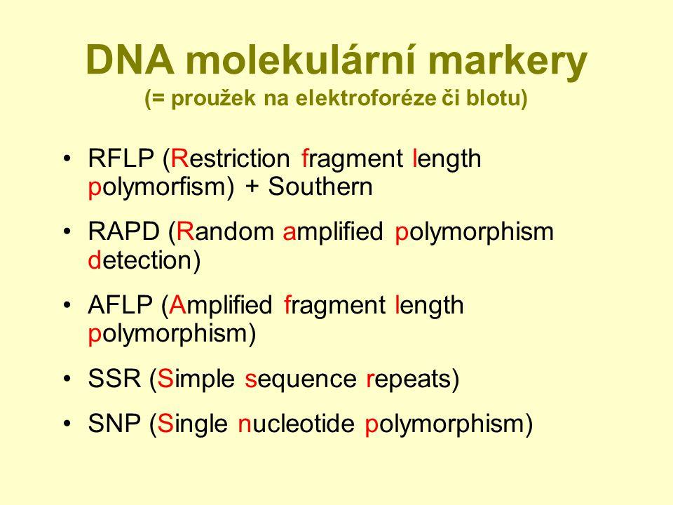 DNA molekulární markery (= proužek na elektroforéze či blotu) RFLP (Restriction fragment length polymorfism) + Southern RAPD (Random amplified polymorphism detection) AFLP (Amplified fragment length polymorphism) SSR (Simple sequence repeats) SNP (Single nucleotide polymorphism)