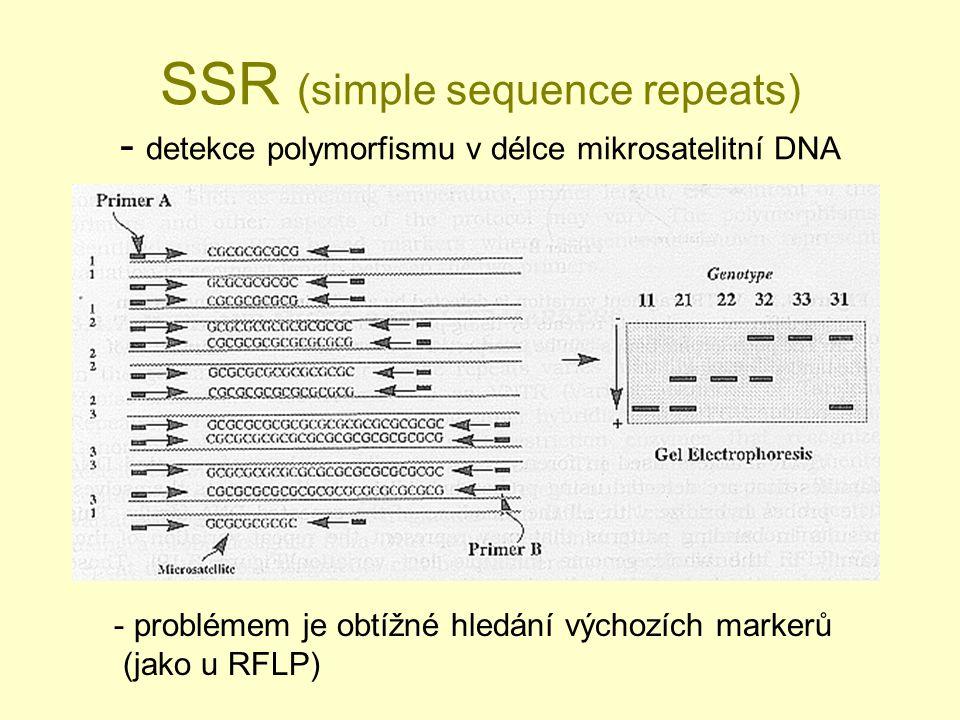 SSR (simple sequence repeats) - detekce polymorfismu v délce mikrosatelitní DNA - problémem je obtížné hledání výchozích markerů (jako u RFLP)