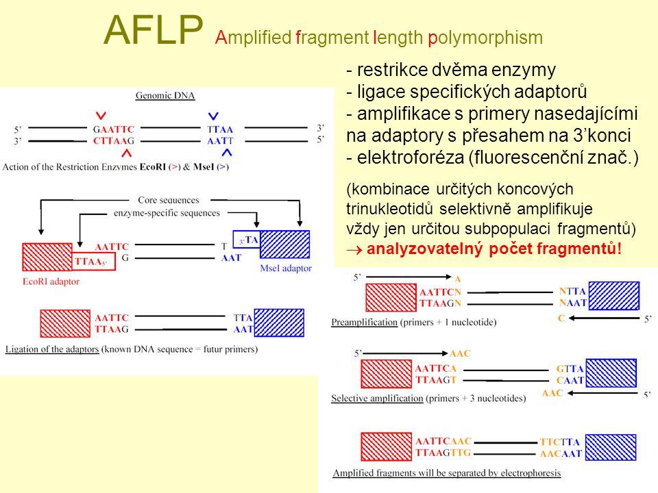 AFLP Amplified fragment length polymorphism - restrikce dvěma enzymy - ligace specifických adaptorů - amplifikace s primery nasedajícími na adaptory s přesahem na 3'konci - elektroforéza (fluorescenční znač.) (kombinace určitých koncových trinukleotidů selektivně amplifikuje vždy jen určitou subpopulaci fragmentů)  analyzovatelný počet fragmentů!