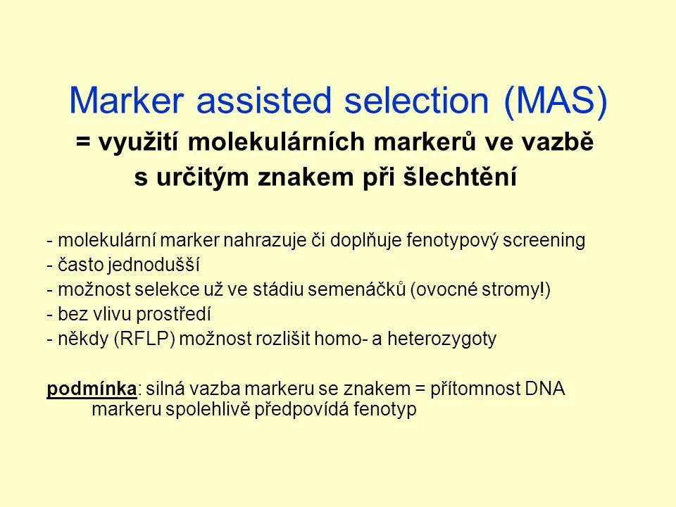 Marker assisted selection (MAS) = využití molekulárních markerů ve vazbě s určitým znakem při šlechtění - molekulární marker nahrazuje či doplňuje fenotypový screening - často jednodušší - možnost selekce už ve stádiu semenáčků (ovocné stromy!) - bez vlivu prostředí - někdy (RFLP) možnost rozlišit homo- a heterozygoty podmínka: silná vazba markeru se znakem = přítomnost DNA markeru spolehlivě předpovídá fenotyp