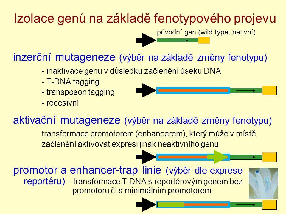 Izolace genů na základě fenotypového projevu inzerční mutageneze (výběr na základě změny fenotypu) - inaktivace genu v důsledku začlenění úseku DNA - T-DNA tagging - transposon tagging - recesivní aktivační mutageneze (výběr na základě změny fenotypu) transformace promotorem (enhancerem), který může v místě začlenění aktivovat expresi jinak neaktivního genu promotor a enhancer-trap linie (výběr dle exprese reportéru) - transformace T-DNA s reportérovým genem bez promotoru či s minimálním promotorem původní gen (wild type, nativní)