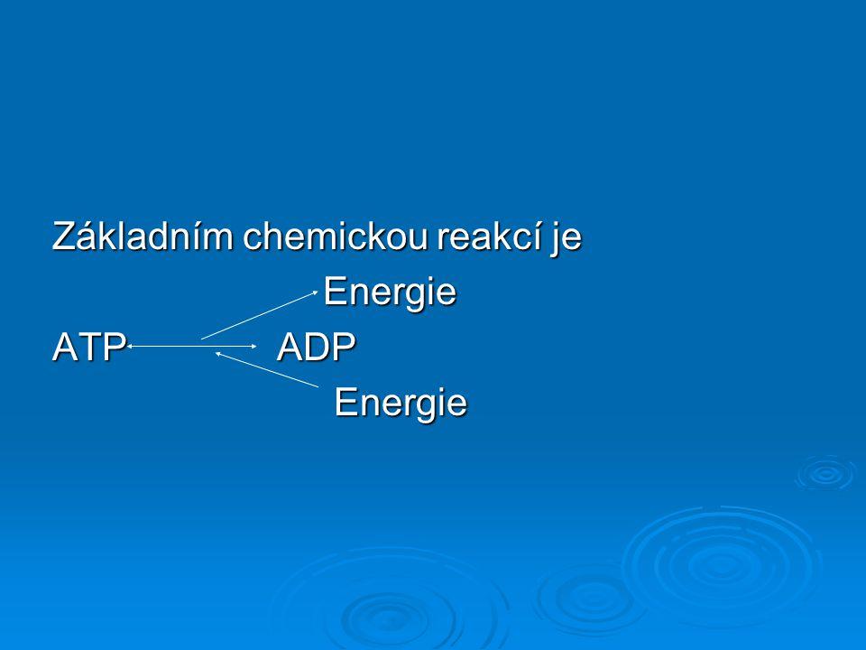 Základním chemickou reakcí je Energie Energie ATP ADP Energie Energie