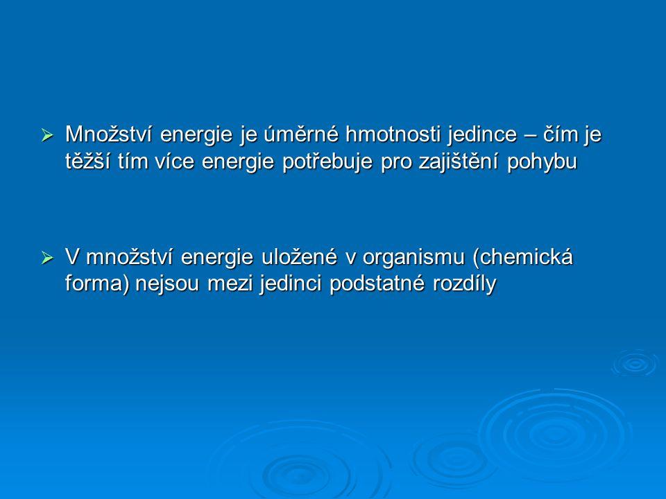  Množství energie je úměrné hmotnosti jedince – čím je těžší tím více energie potřebuje pro zajištění pohybu  V množství energie uložené v organismu (chemická forma) nejsou mezi jedinci podstatné rozdíly