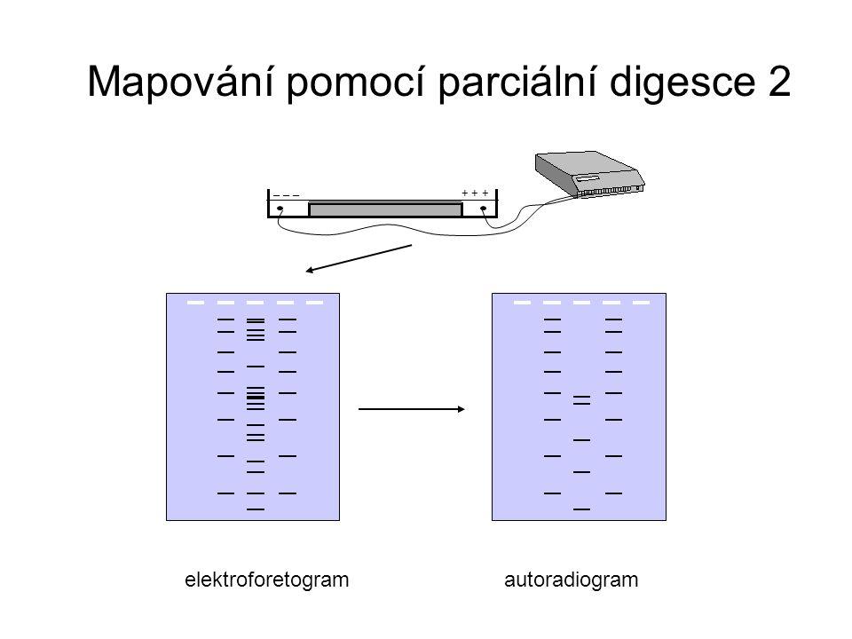 + + + _ _ _ elektroforetogramautoradiogram Mapování pomocí parciální digesce 2