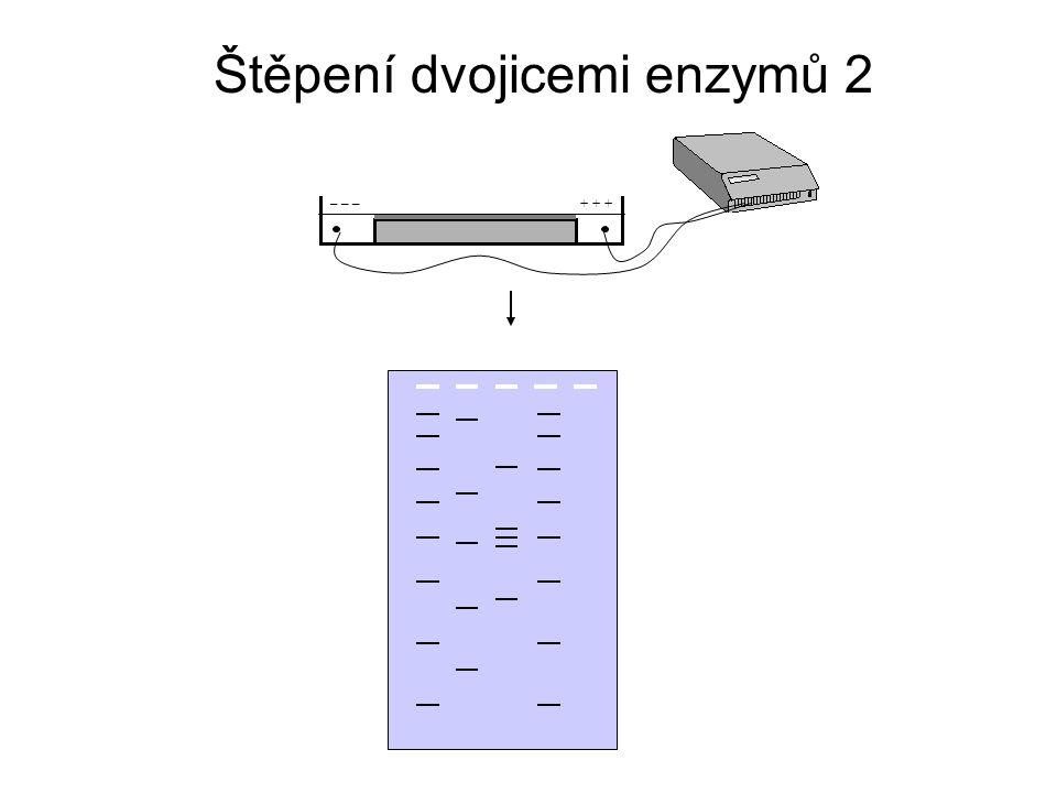 A C E D B G H J F I A C E D B štěpení BamHIštěpení EcoRI G H J F I 1 4 6 9 3 5 78 1 3 5 7 8 2 6 24 9 Štěpení dvojicemi enzymů 3