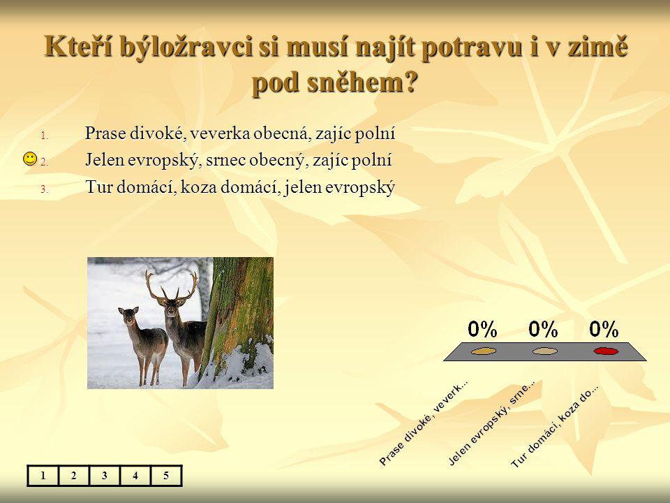 Kteří býložravci si musí najít potravu i v zimě pod sněhem? 12345 1. Prase divoké, veverka obecná, zajíc polní 2. Jelen evropský, srnec obecný, zajíc