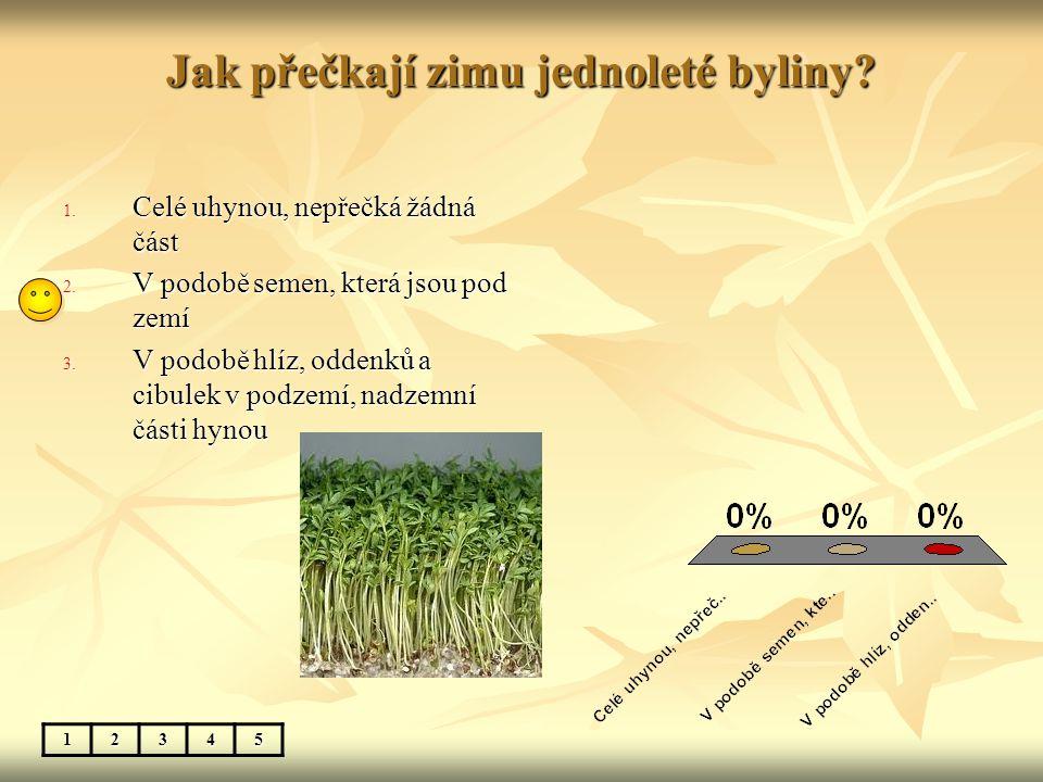 Jak přečkají zimu jednoleté byliny? 1. Celé uhynou, nepřečká žádná část 2. V podobě semen, která jsou pod zemí 3. V podobě hlíz, oddenků a cibulek v p