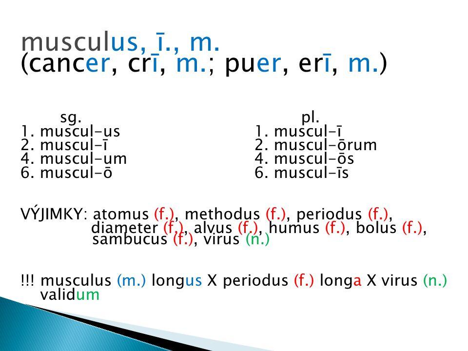musculus, ī., m.(cancer, crī, m.; puer, erī, m.) sg.pl.