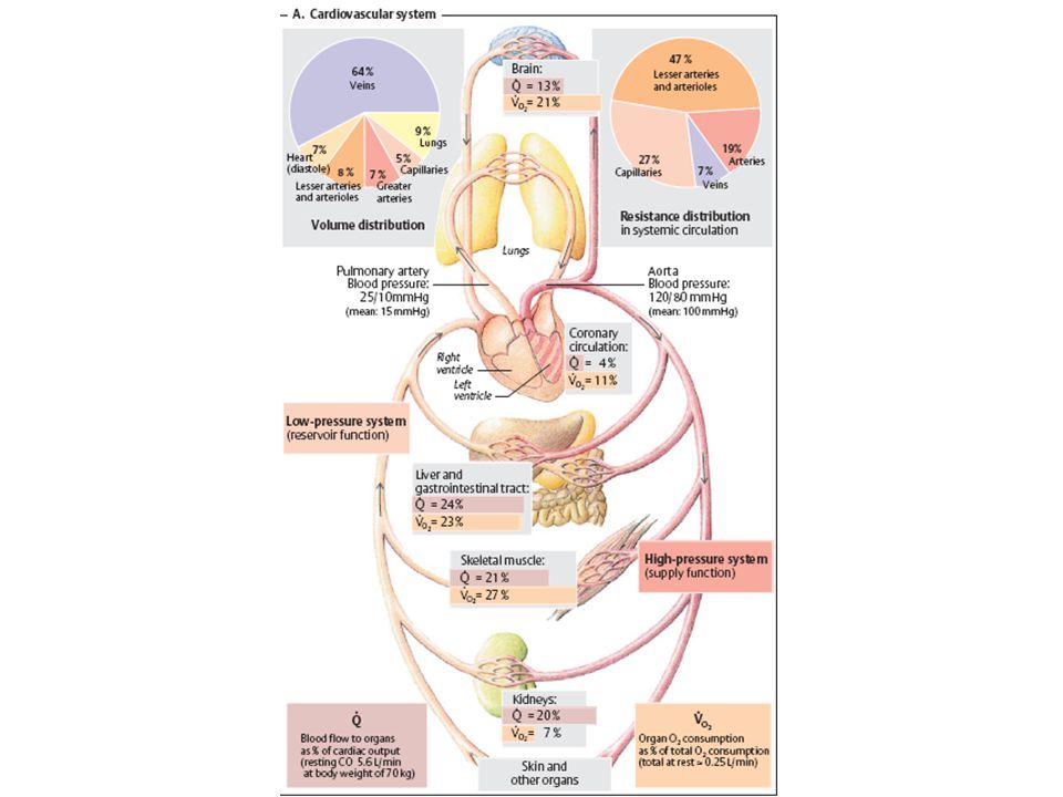 Známé množství indikátoru se injikuje do cévního řečiště a současně je zjišťována jeho koncentrace v arteriální krvi  Časový průběh je výsledkem poměru mezi množstvím vstříknuté látky a velikosti průtoku srdce  MSV se pak rovná množství indikátoru dělenému plochou pod křivkou koncentrace indikátoru v čase