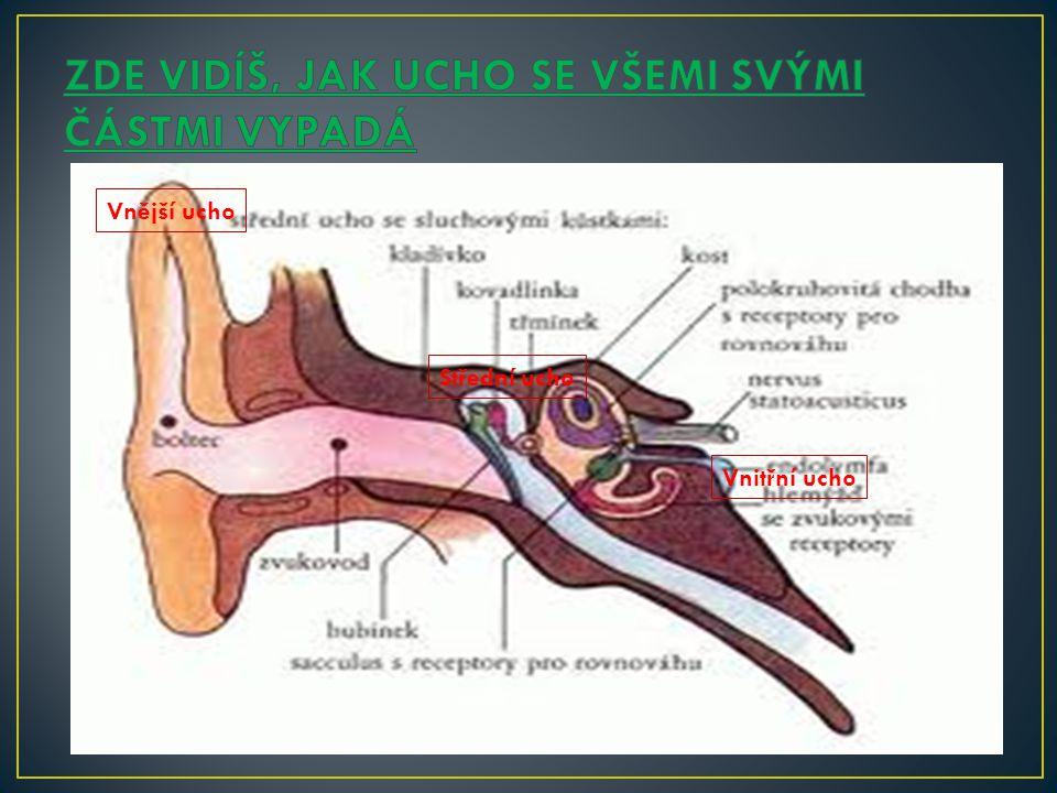 Vnější ucho Střední ucho Vnitřní ucho