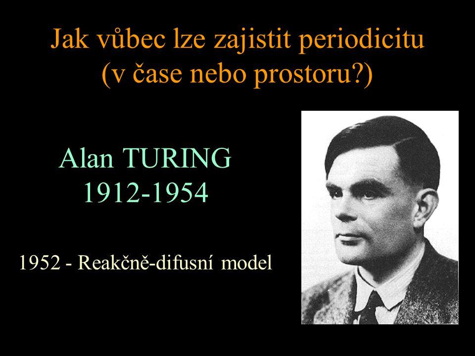 Jak vůbec lze zajistit periodicitu (v čase nebo prostoru ) Alan TURING 1912-1954 1952 - Reakčně-difusní model