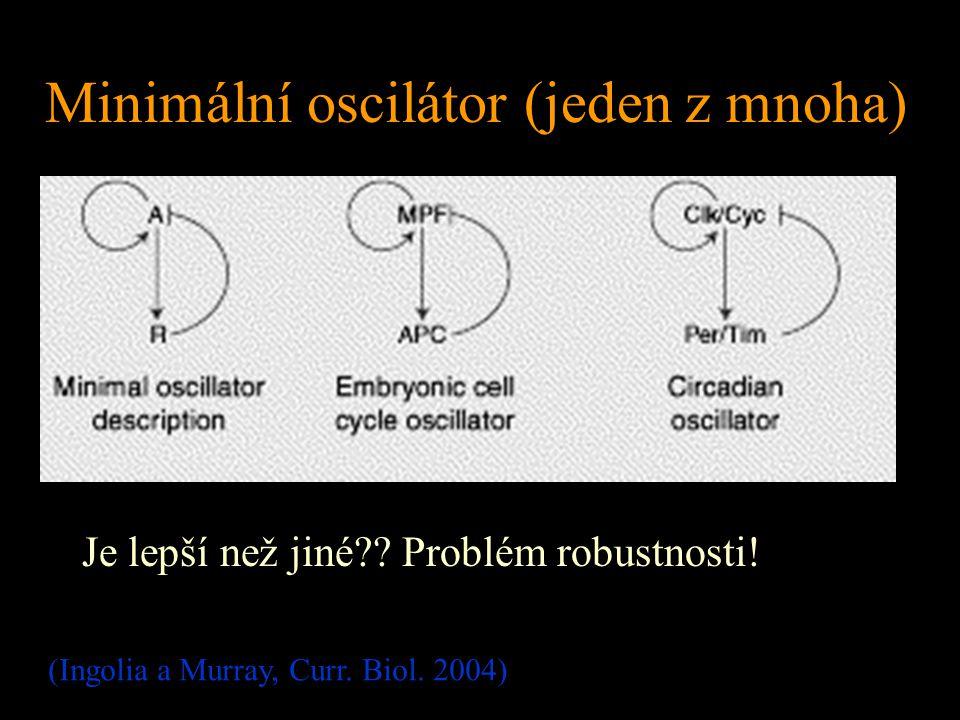 Minimální oscilátor (jeden z mnoha) Je lepší než jiné?? Problém robustnosti! (Ingolia a Murray, Curr. Biol. 2004)