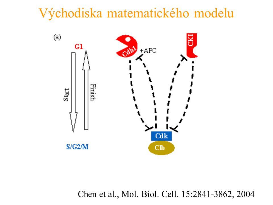 Chen et al., Mol. Biol. Cell. 15:2841-3862, 2004 Východiska matematického modelu