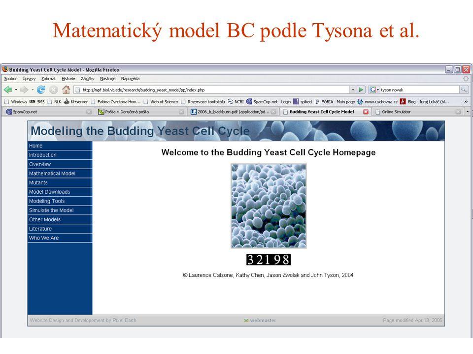 Matematický model BC podle Tysona et al.