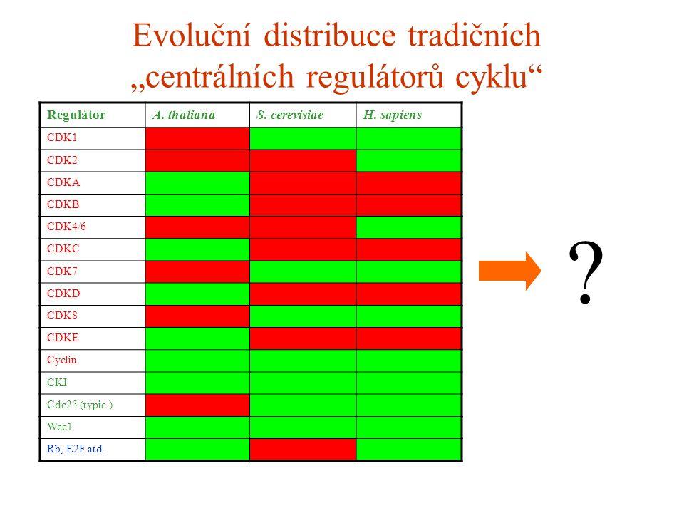 """Evoluční distribuce tradičních """"centrálních regulátorů cyklu"""" RegulátorA. thalianaS. cerevisiaeH. sapiens CDK1 CDK2 CDKA CDKB CDK4/6 CDKC CDK7 CDKD CD"""