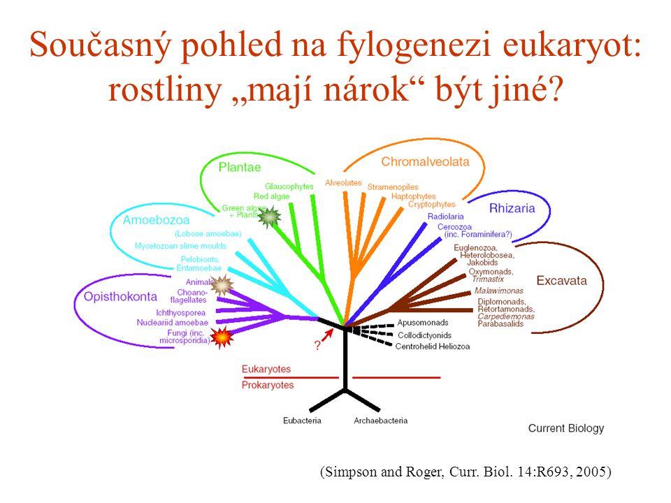 """Současný pohled na fylogenezi eukaryot: rostliny """"mají nárok"""" být jiné? (Simpson and Roger, Curr. Biol. 14:R693, 2005)"""