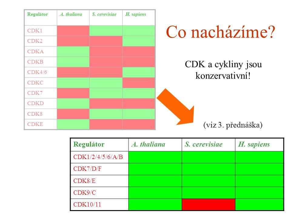 RegulátorA. thalianaS. cerevisiaeH. sapiens CDK1 CDK2 CDKA CDKB CDK4/6 CDKC CDK7 CDKD CDK8 CDKE RegulátorA. thalianaS. cerevisiaeH. sapiens CDK1/2/4/5