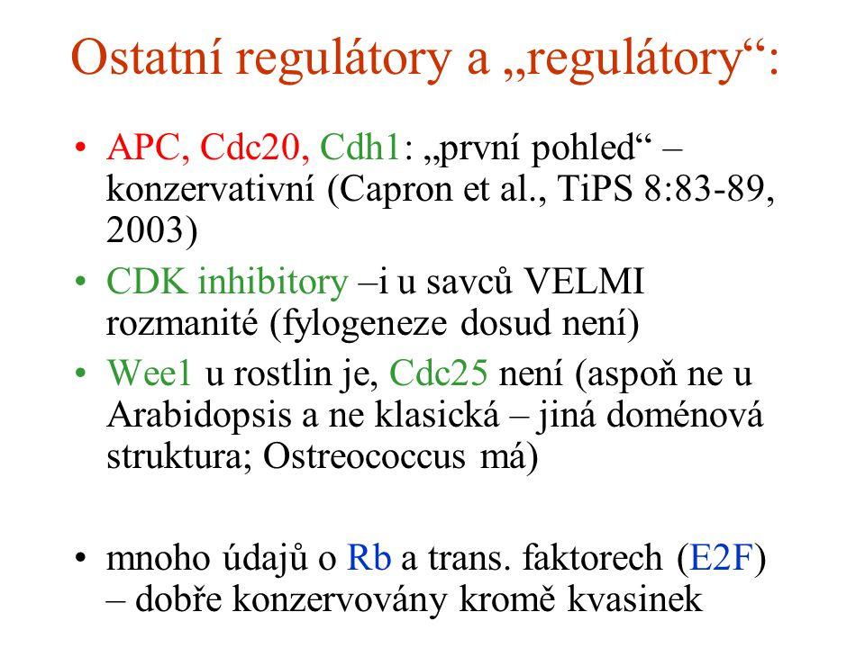 """Ostatní regulátory a """"regulátory : APC, Cdc20, Cdh1: """"první pohled – konzervativní (Capron et al., TiPS 8:83-89, 2003) CDK inhibitory –i u savců VELMI rozmanité (fylogeneze dosud není) Wee1 u rostlin je, Cdc25 není (aspoň ne u Arabidopsis a ne klasická – jiná doménová struktura; Ostreococcus má) mnoho údajů o Rb a trans."""