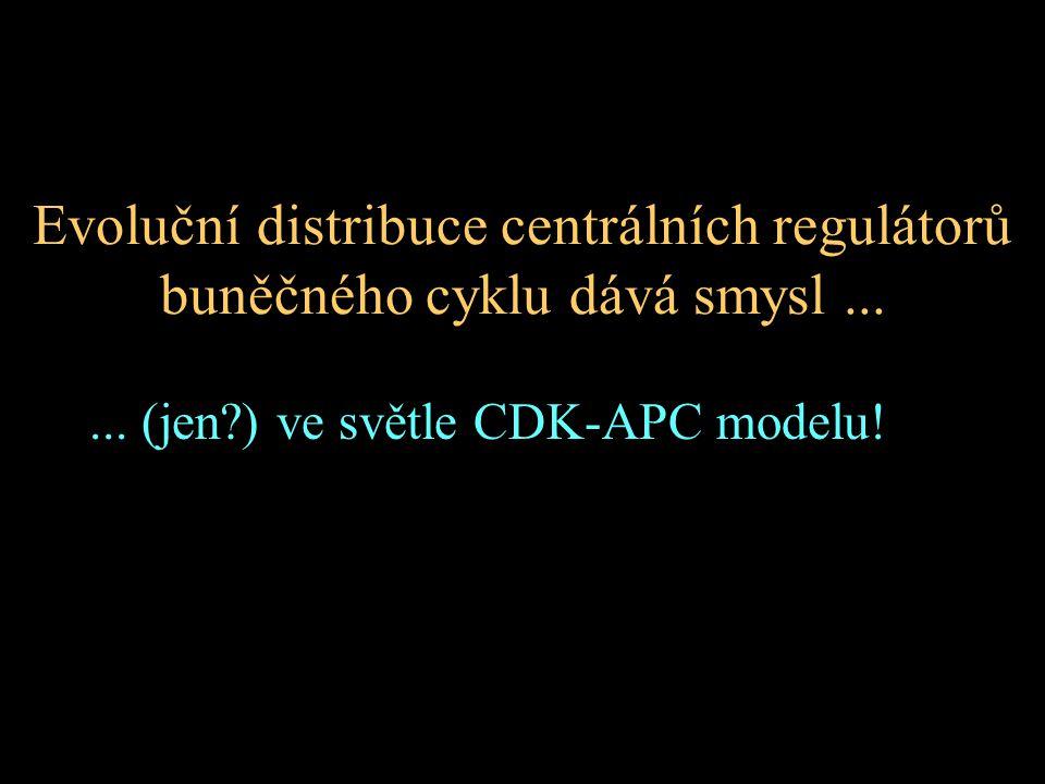 Evoluční distribuce centrálních regulátorů buněčného cyklu dává smysl...... (jen?) ve světle CDK-APC modelu!