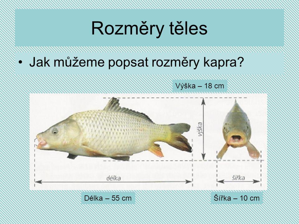 Rozměry těles Jak můžeme popsat rozměry kapra? Délka – 55 cmŠířka – 10 cm Výška – 18 cm