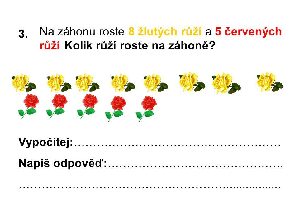 3.Na záhonu roste 8 žlutých růží a 5 červených růží.