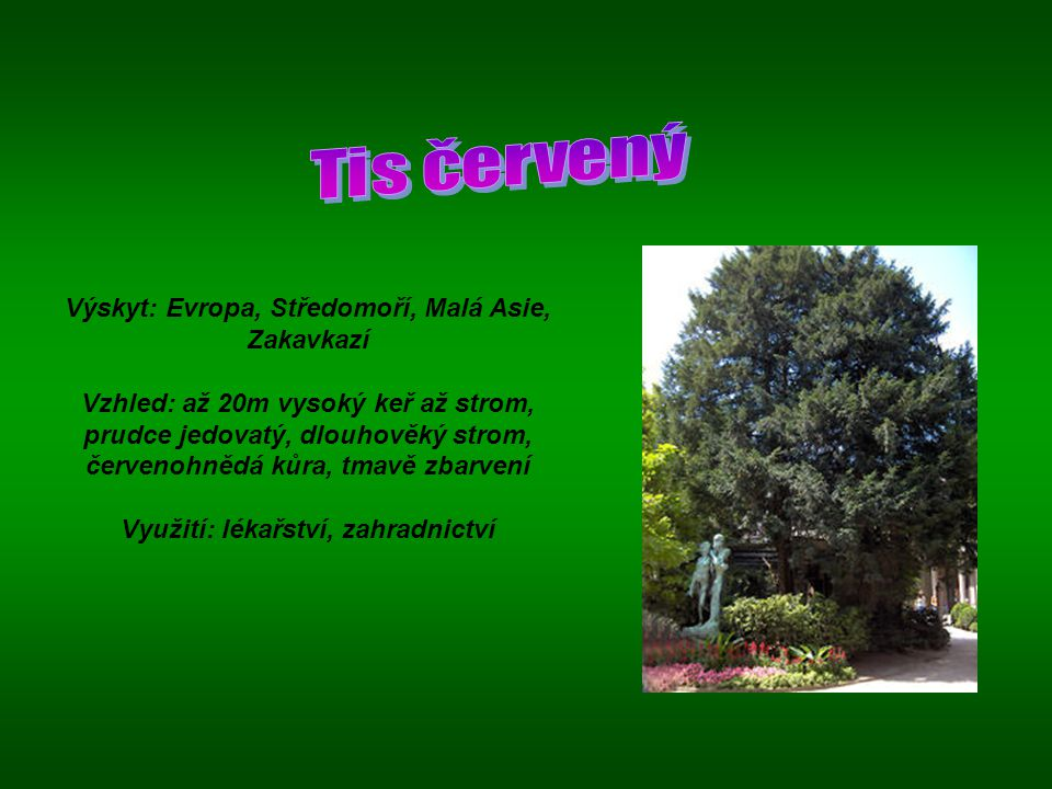 Výskyt: Evropa, Středomoří, Malá Asie, Zakavkazí Vzhled: až 20m vysoký keř až strom, prudce jedovatý, dlouhověký strom, červenohnědá kůra, tmavě zbarv