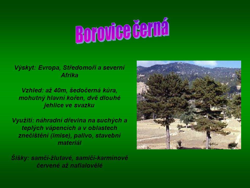 Výskyt: jihovýchod Spojených států Vzhled: strom až 40m vysoký, šedohnědá tenká kůra, kuželovitá koruna, vzdušné kořeny