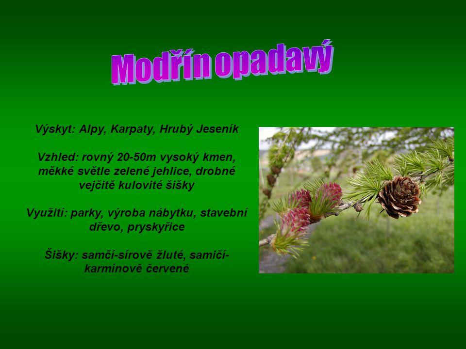 Výskyt: Alpy, Karpaty, Hrubý Jeseník Vzhled: rovný 20-50m vysoký kmen, měkké světle zelené jehlice, drobné vejčitě kulovité šišky Využití: parky, výro