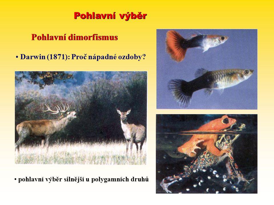 Pohlavní výběr Pohlavní dimorfismus Darwin (1871): Proč nápadné ozdoby? pohlavní výběr silnější u polygamních druhů