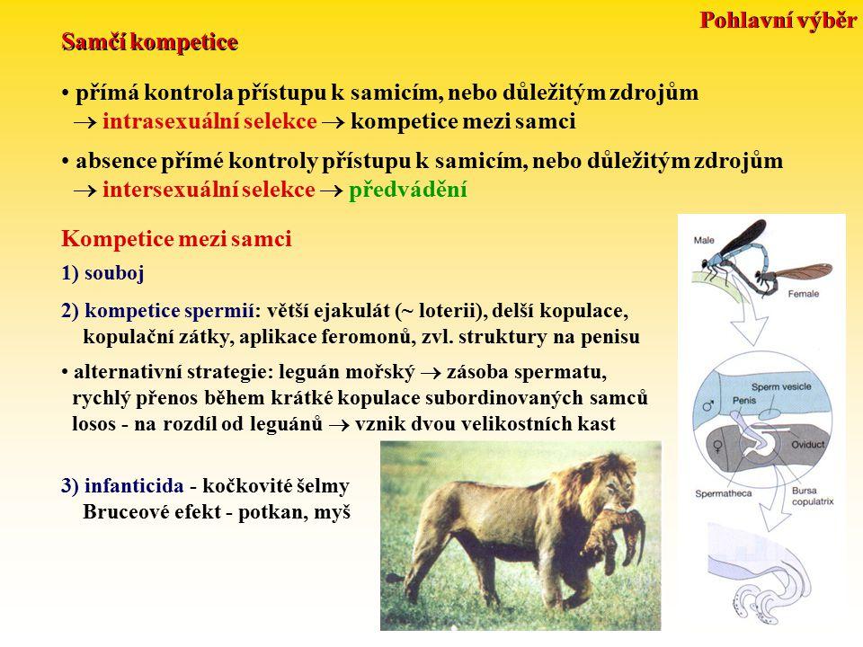 přímá kontrola přístupu k samicím, nebo důležitým zdrojům  intrasexuální selekce  kompetice mezi samci Samčí kompetice absence přímé kontroly přístupu k samicím, nebo důležitým zdrojům  intersexuální selekce  předvádění Kompetice mezi samci 1) souboj 2) kompetice spermií: větší ejakulát (~ loterii), delší kopulace, kopulační zátky, aplikace feromonů, zvl.
