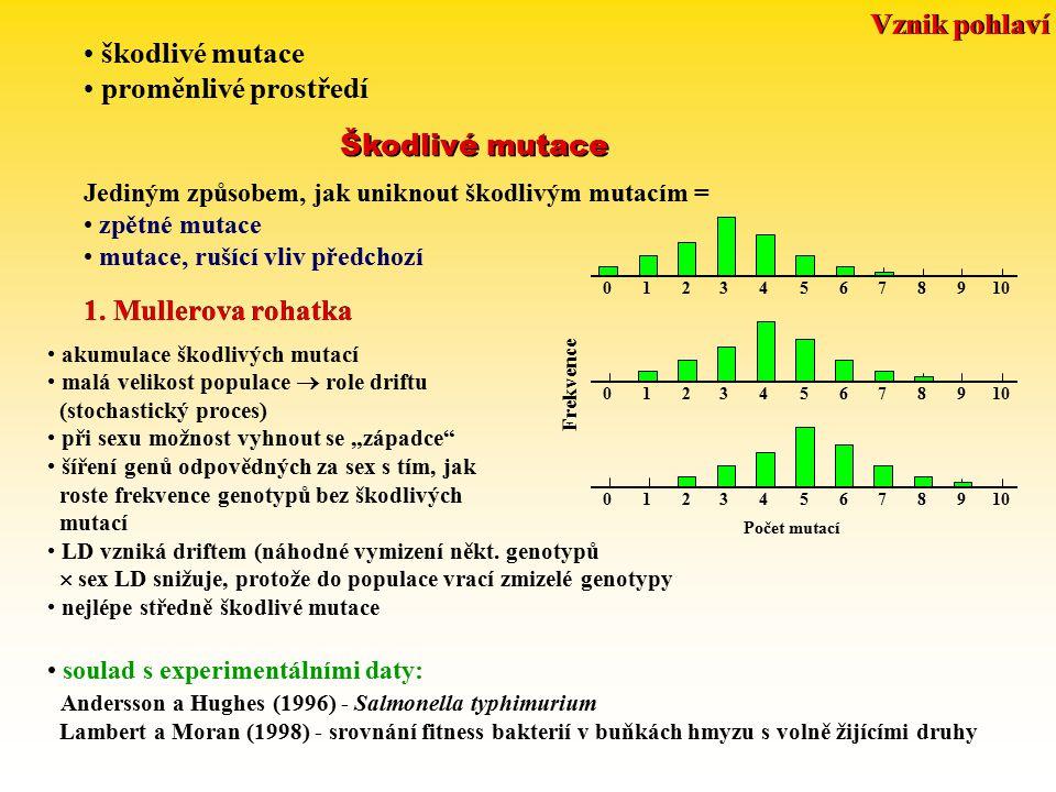 škodlivé mutace proměnlivé prostředí Škodlivé mutace 1. Mullerova rohatka akumulace škodlivých mutací malá velikost populace  role driftu (stochastic