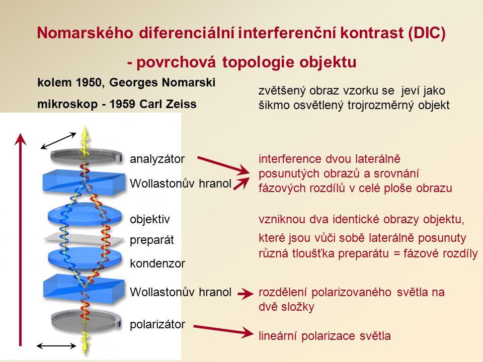 vzniknou dva identické obrazy objektu, které jsou vůči sobě laterálně posunuty různá tloušťka preparátu = fázové rozdíly Nomarského diferenciální interferenční kontrast (DIC) - povrchová topologie objektu kolem 1950, Georges Nomarski mikroskop - 1959 Carl Zeiss polarizátor Wollastonův hranol kondenzor preparát objektiv Wollastonův hranol analyzátor lineární polarizace světla rozdělení polarizovaného světla na dvě složky interference dvou laterálně posunutých obrazů a srovnání fázových rozdílů v celé ploše obrazu zvětšený obraz vzorku se jeví jako šikmo osvětlený trojrozměrný objekt