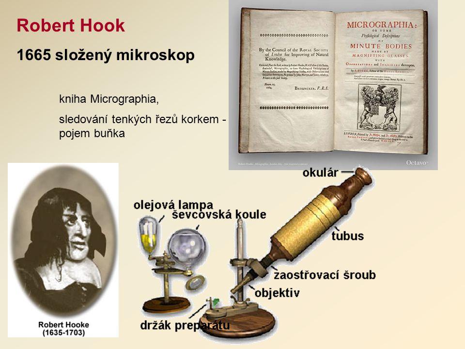 Robert Hook 1665 složený mikroskop kniha Micrographia, sledování tenkých řezů korkem - pojem buňka